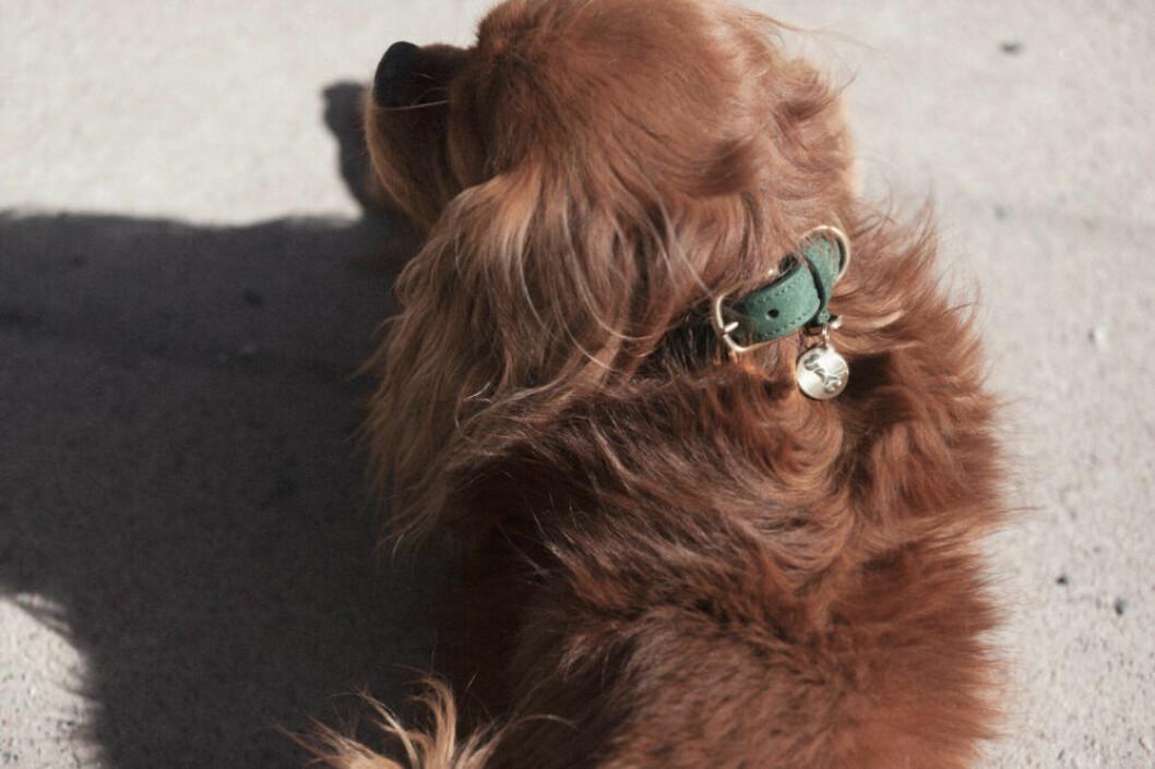 Hundnamnbricka i mässing