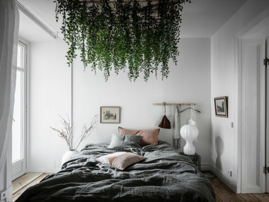 Växter i taket
