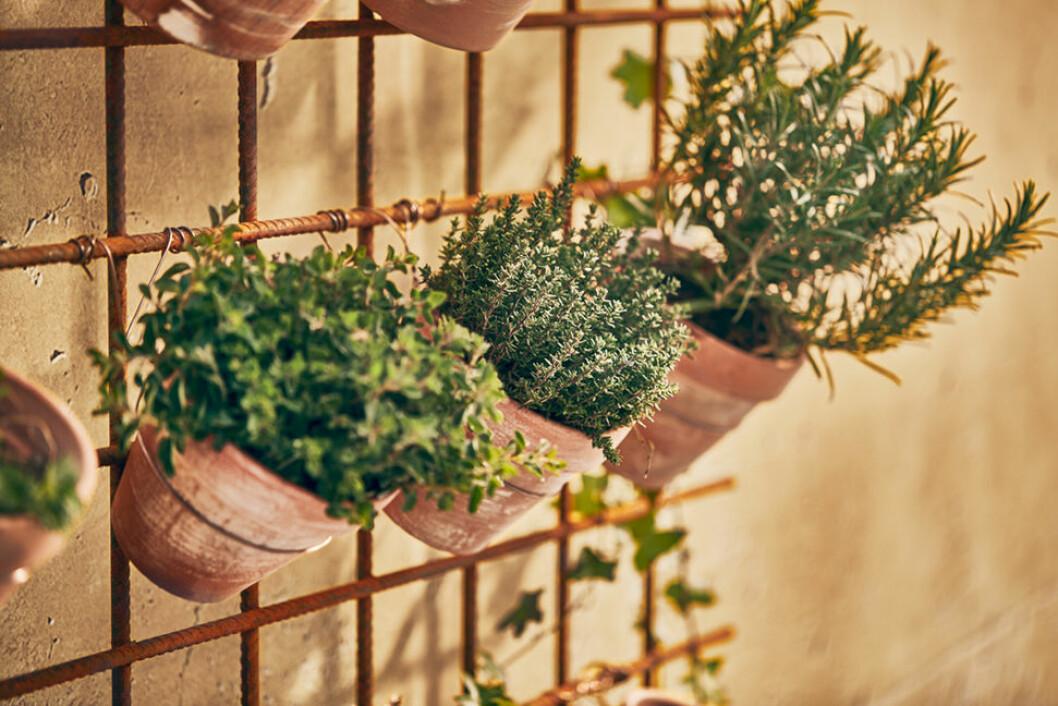 patinerade krukor hänger på rad med gröna växter i