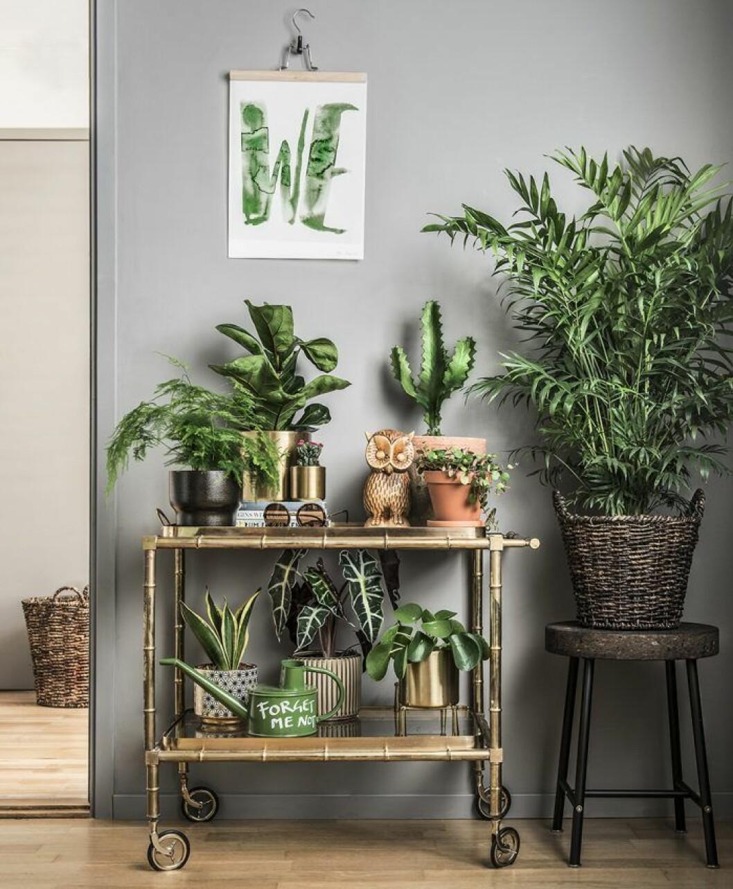 Pimpa drinkvagnen med växter