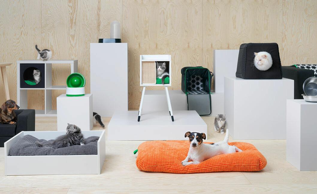 Nu lanseras en hund och katt kollektion.