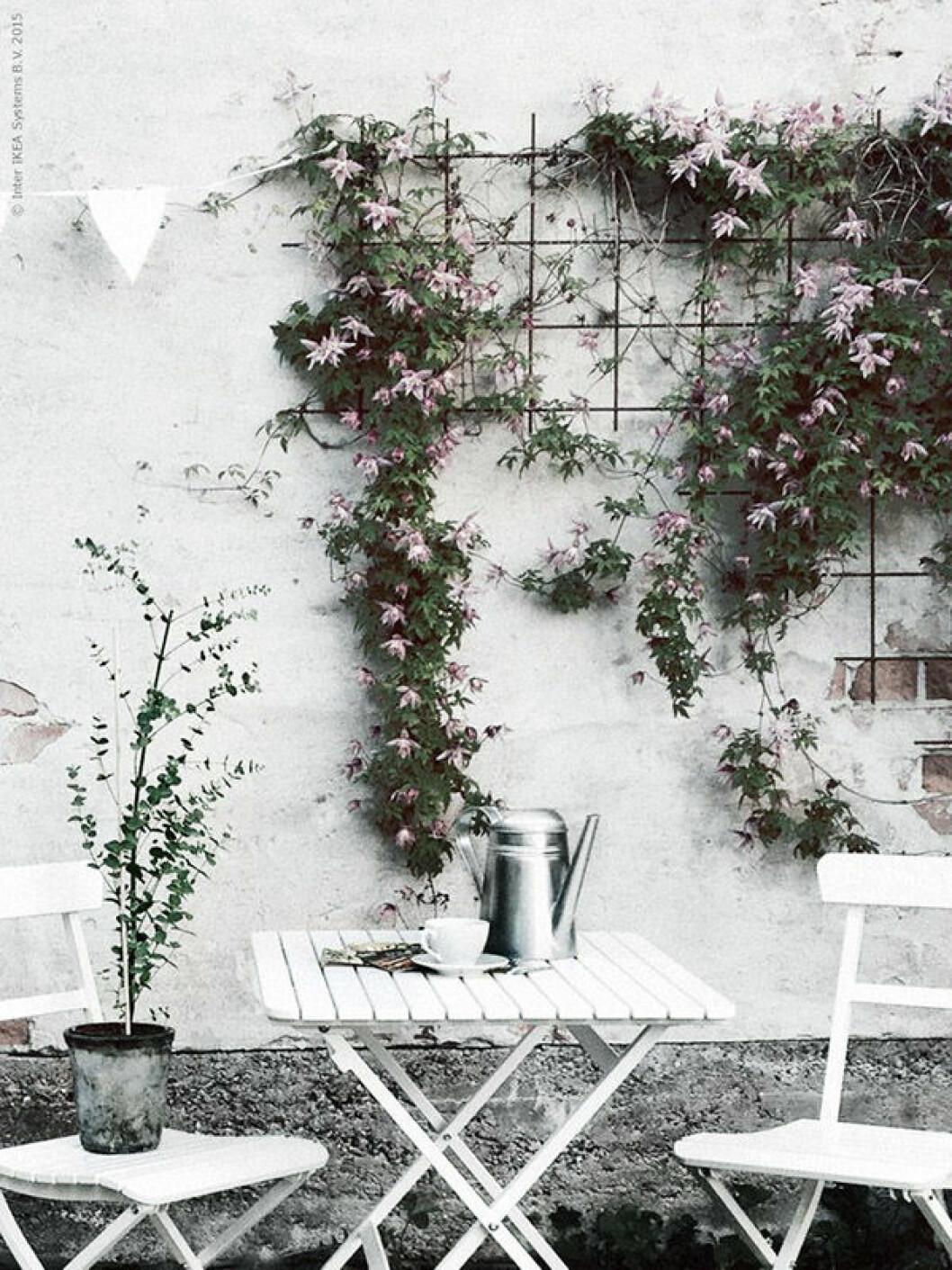 Uteplats med växter och blommor.