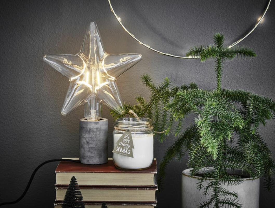 Detaljbild på julstjärnor
