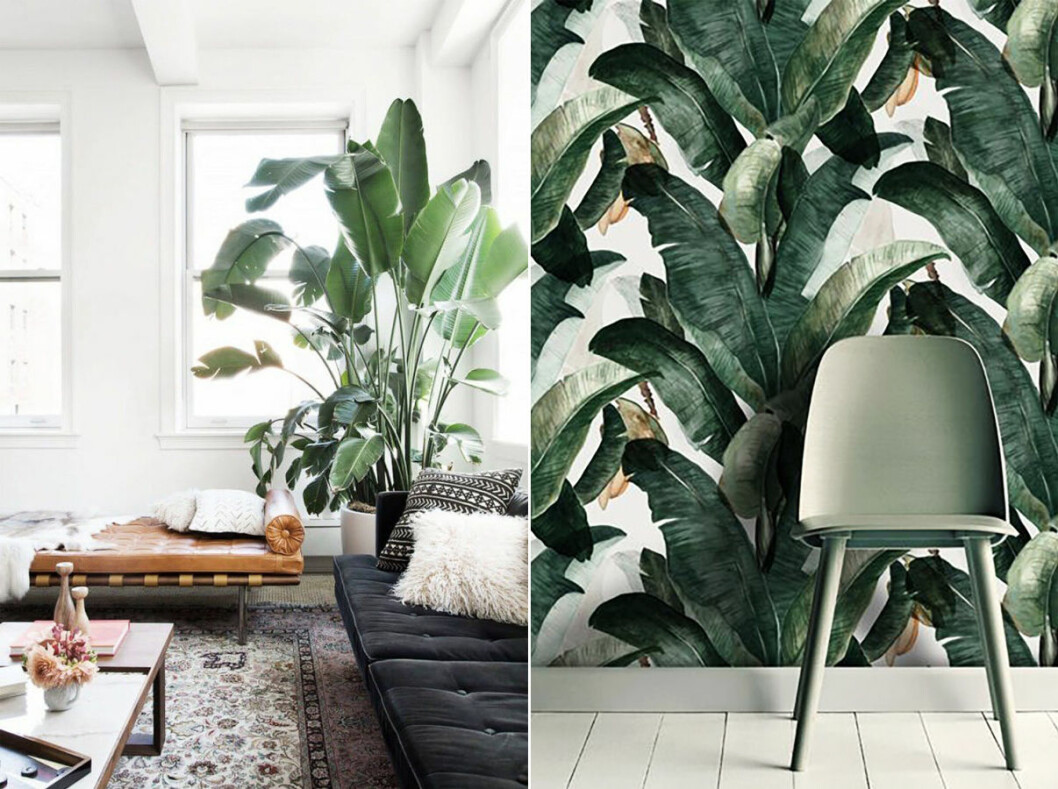 Tapet med mönster av bananplanta
