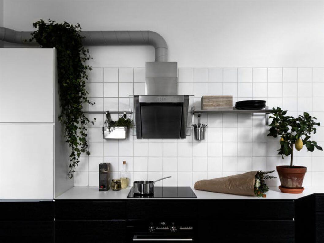 Klängväxter i öppet kök
