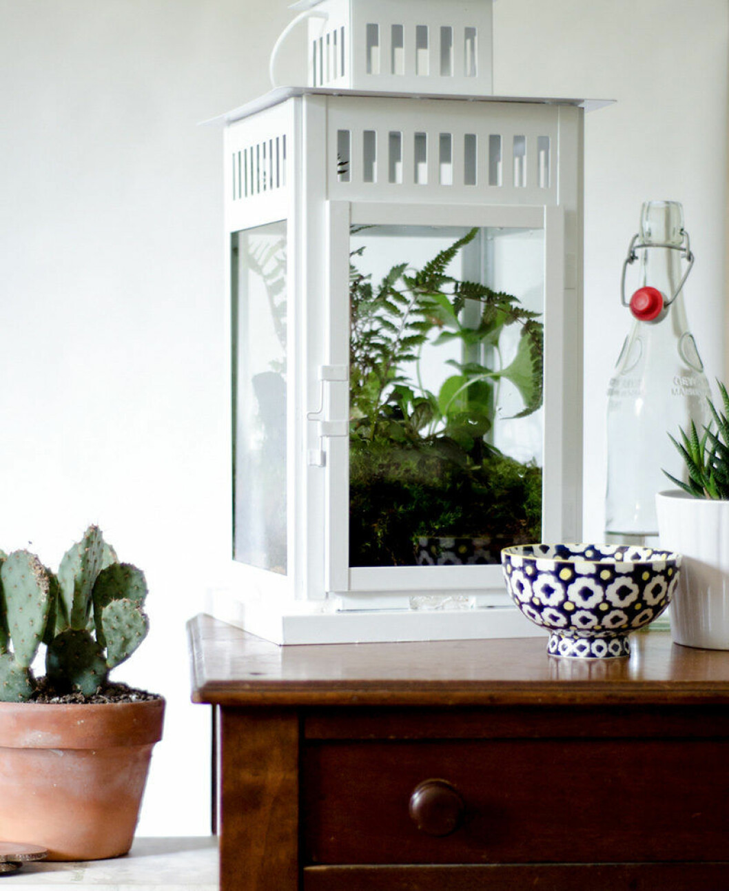 Växtterrarium i form av en vit lykta
