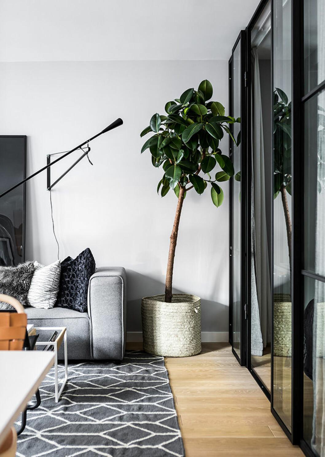Planta i korg i vardagsrummet