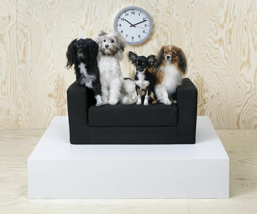 Möbler för djur.