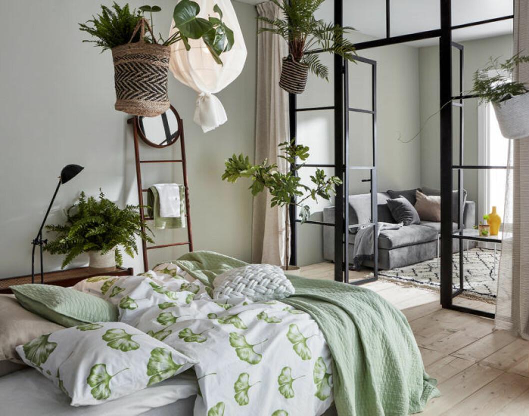Sovrum med grönmönstrade sängkläder, växter i taket och glasvägg.
