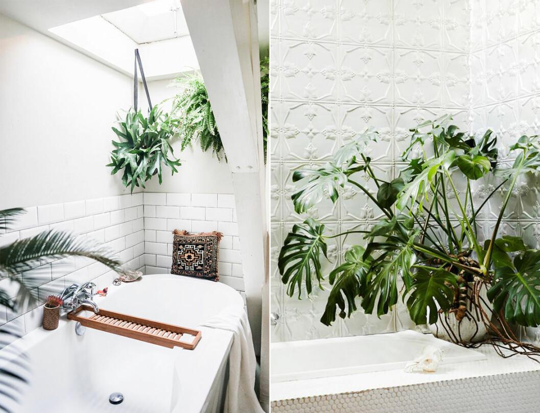 Inred badrummet med växter.