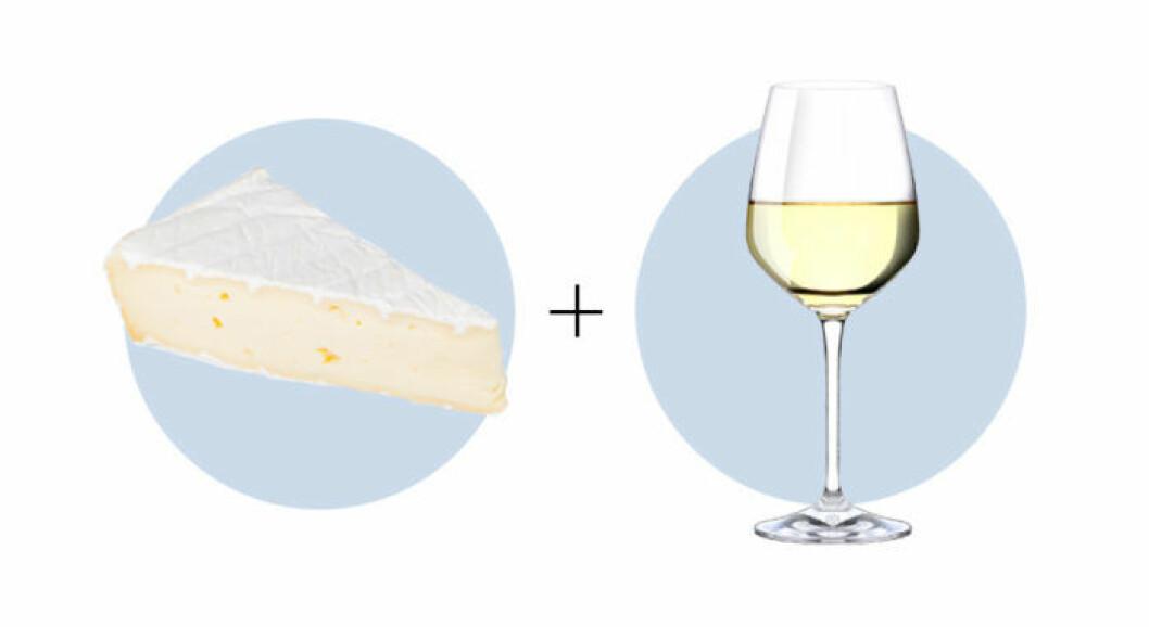 Ost och vinkombination Camembert och Chardonnay