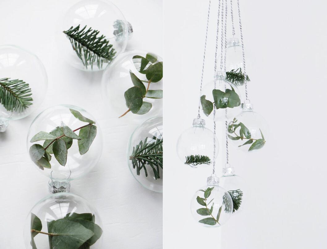 glaskulor med växter i