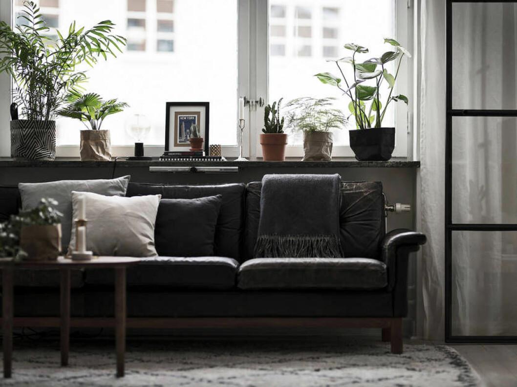 Fönsterbräda med en härlig mix av böcker, konst och växter