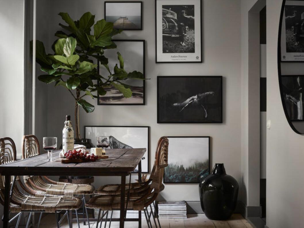 Matplats med matbord i trä, rottingstolar. Fiolfikus och trendig tavelvägg.
