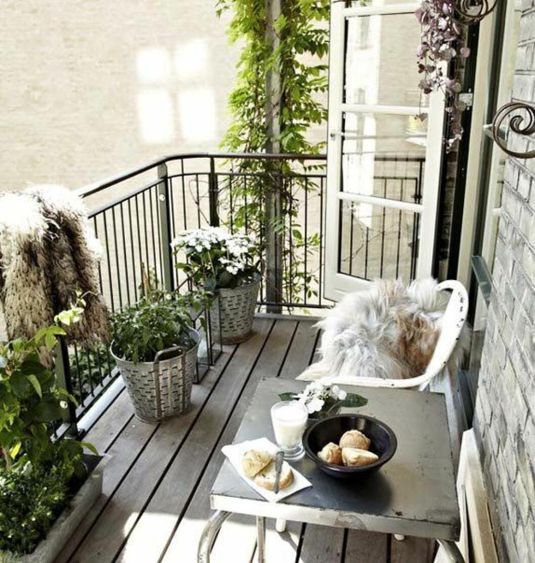 07. balkong med gröna växter och solljus.