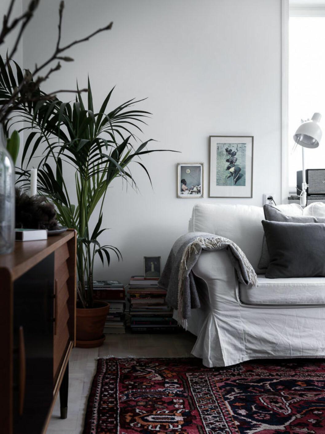 Vardagsrum med växter