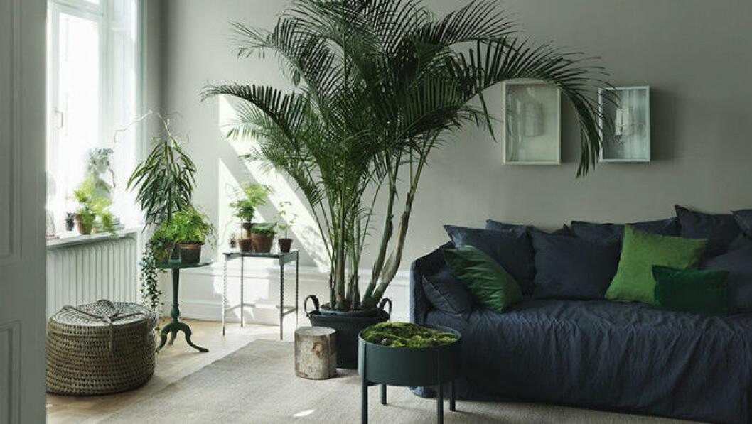 Olika krukväxter i hemmet