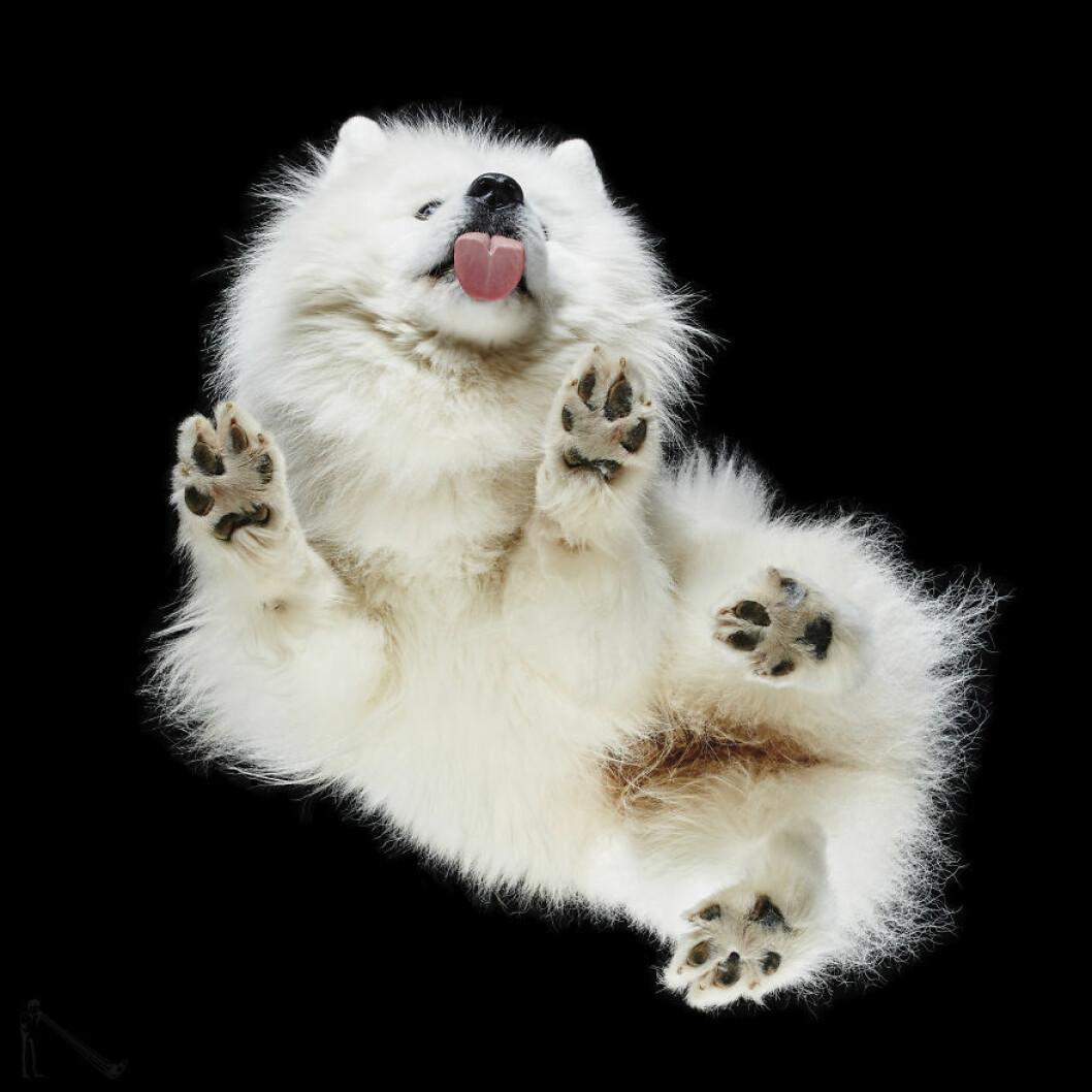 Gullig vit hund