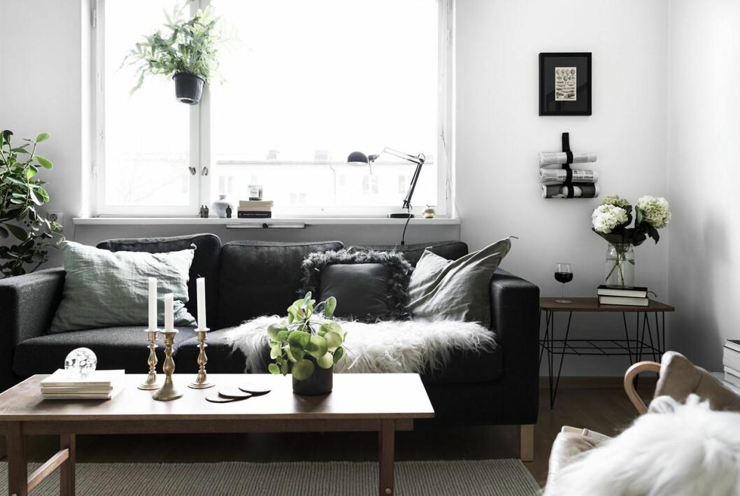 Växter, vardagsrum