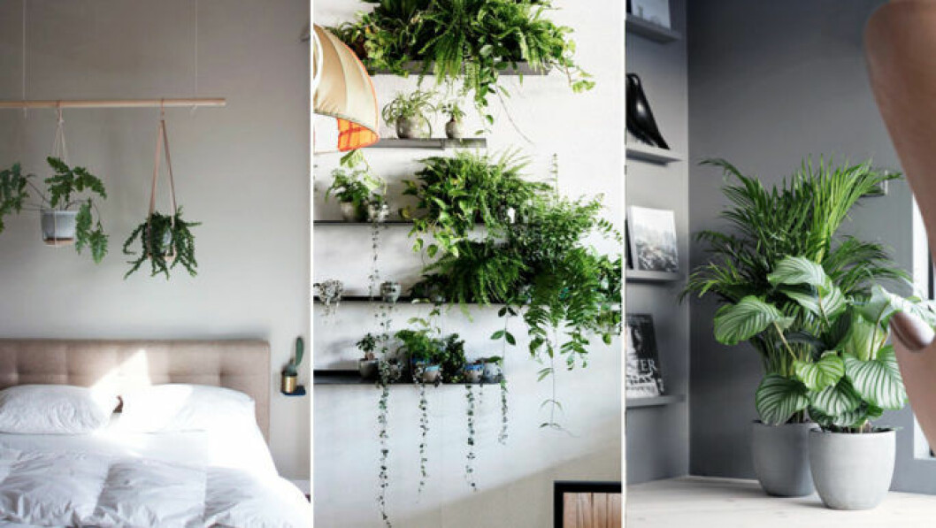 Vägghängda växter