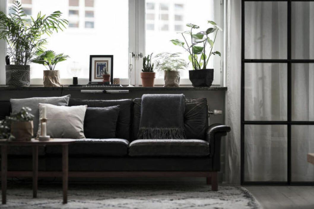 Vardagsrum där fönsterbrädan nyttjas för växter, konst och smådetaljer
