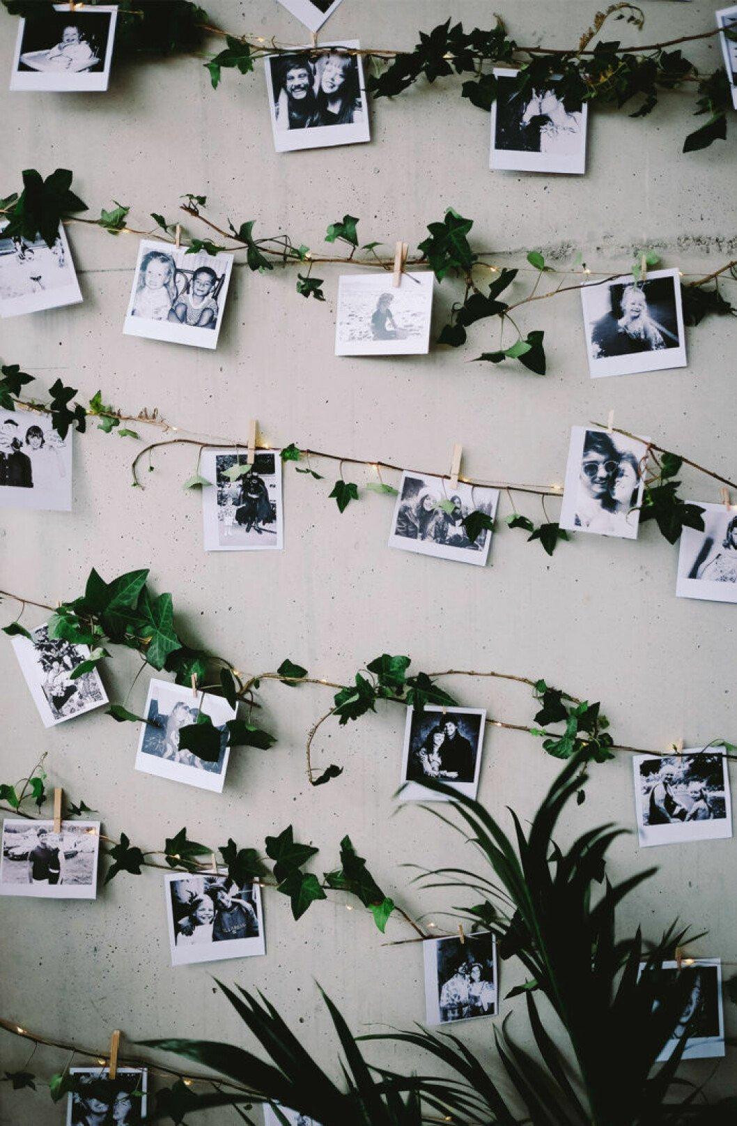 Fotografier fästa på murgröna