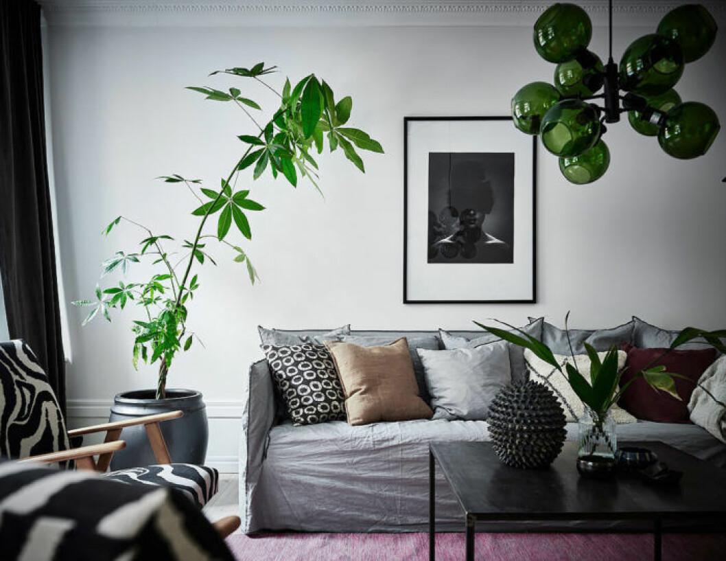 Klargrönt som accentfärg på lampa, kuddar och växter