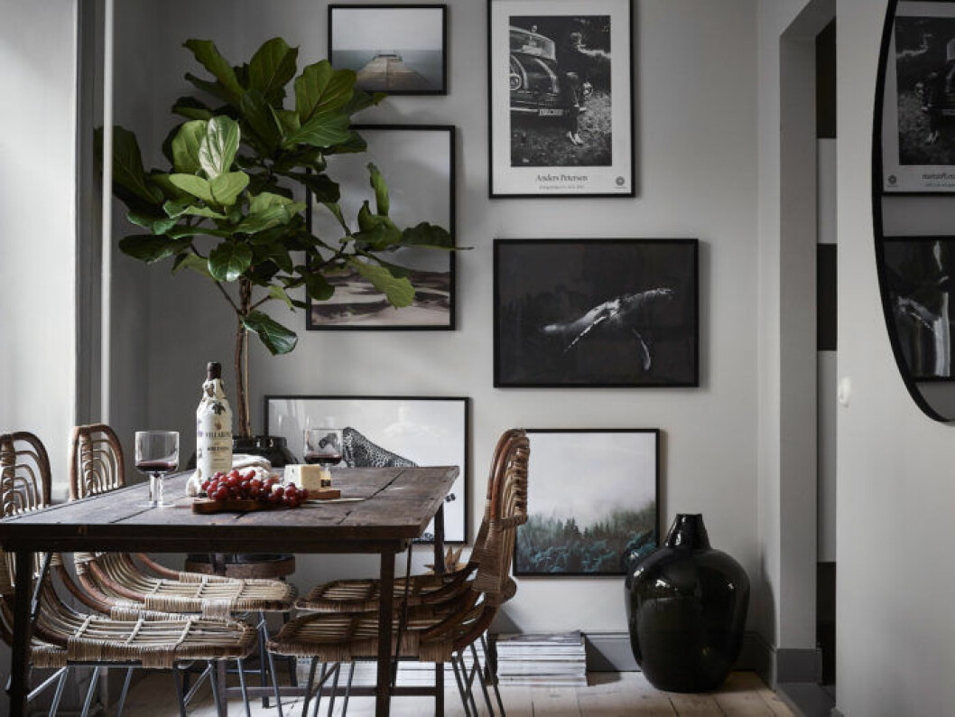 Scandinavian decoration and ideas. Artwall besides the dining table and ficus lyrata.