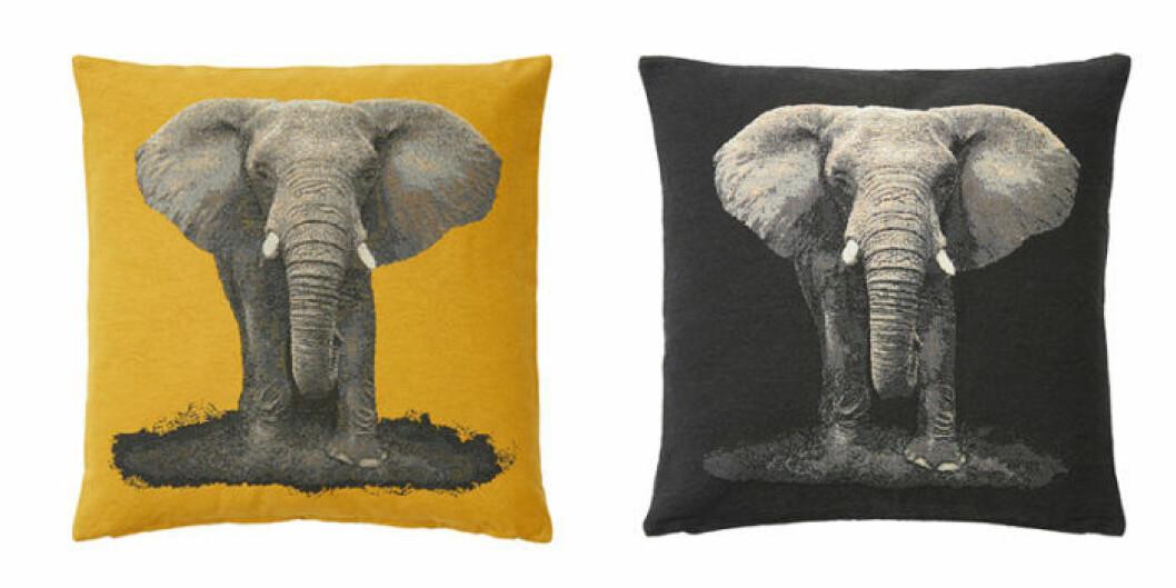Kudde med elefanter.
