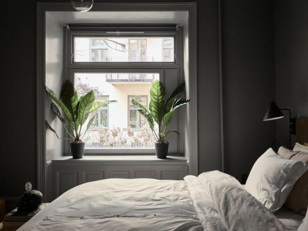 Mörkmålade mörkgrå väggar i sovrummet, Mole's breath, från Farrow & ball. Svart sänglampa på väggen.