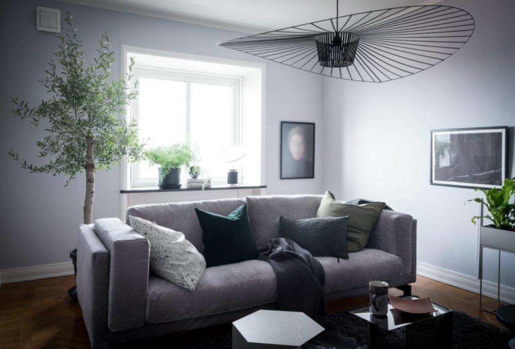 Träd i vardagsrummet. Takpendel och grå soffa.