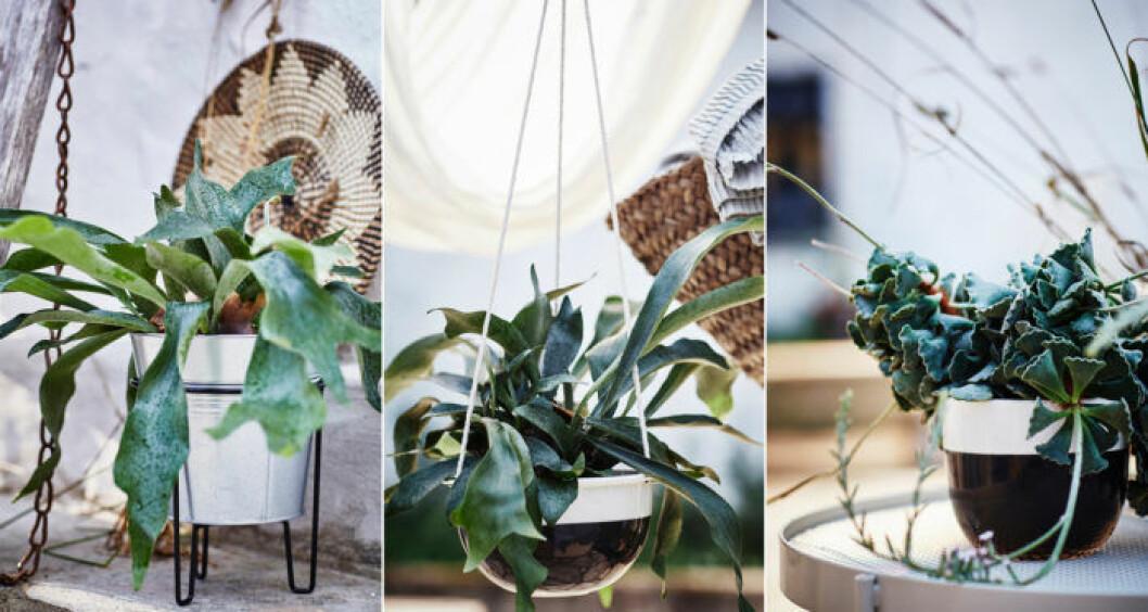 Kruka i liten piedestal, ampel vit och svart, gröna växter. Ikeas sommarnyheter 2018.