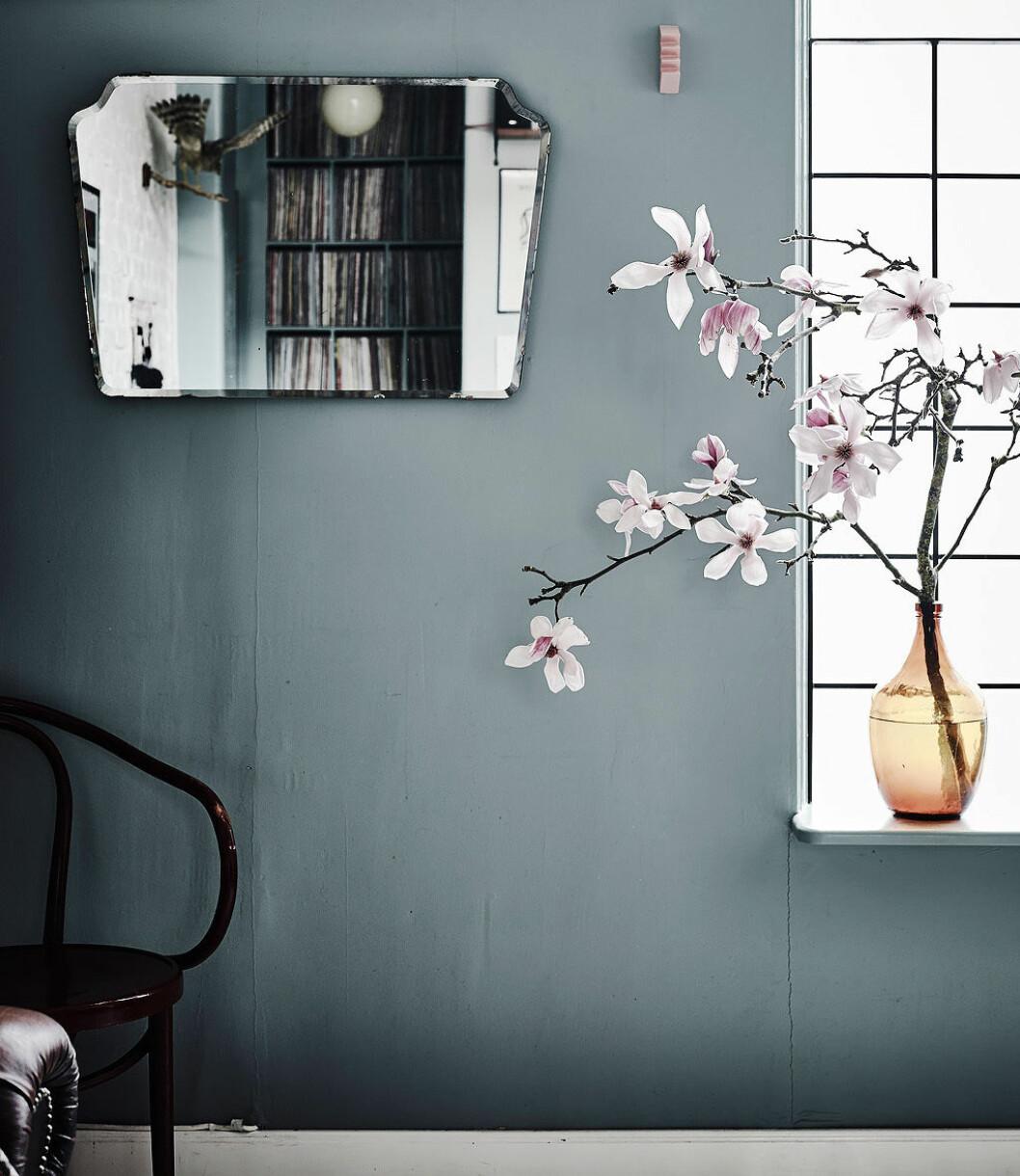 Magnolia på fönsterbräda