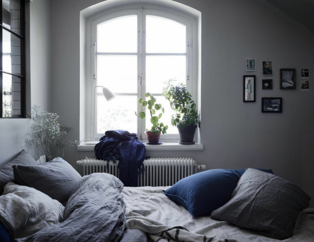 Mysigt sovrum med glasfönster, elefantöra i kruka. Liten tavelvägg.