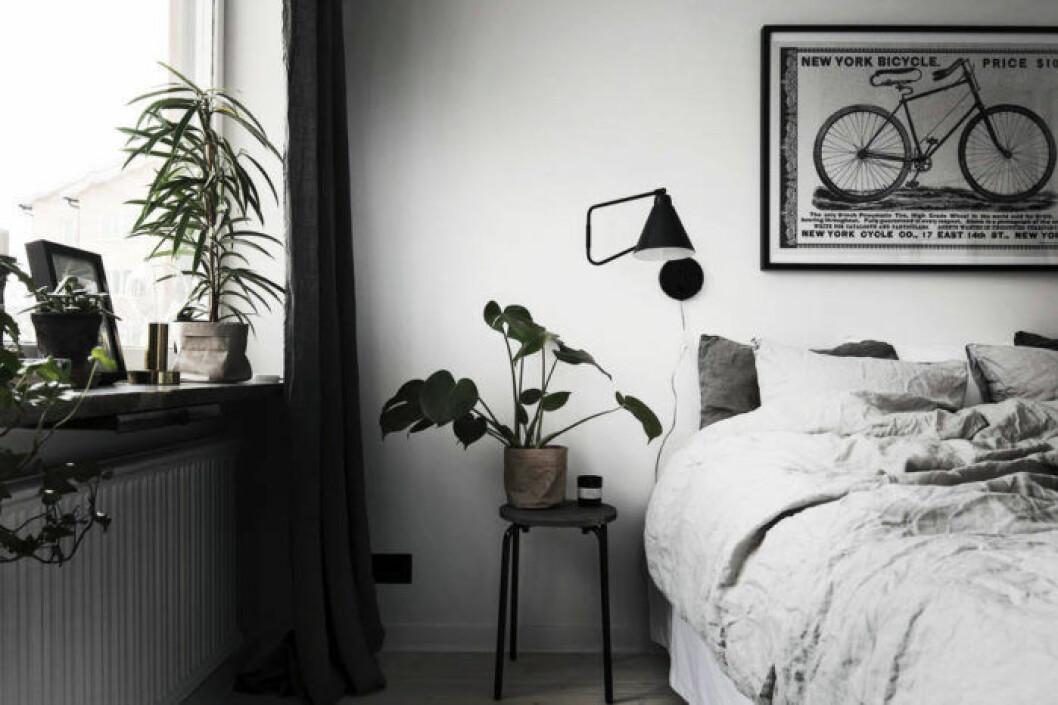 Sovrum med olika växter i fokus