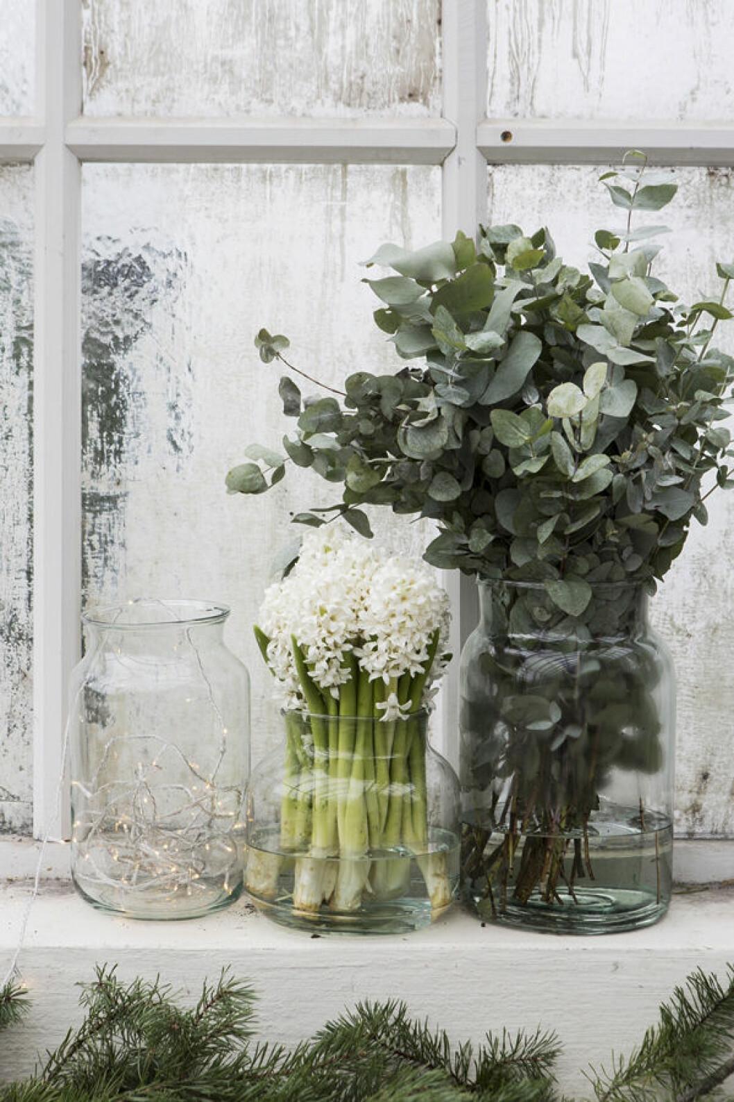 Tre vaser, en med en ljusslinga, en full av hyacinter och den tredje med eucalyptus.