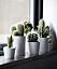 Fönsterbräda med flera miniväxter som står tillsammans i en grupp