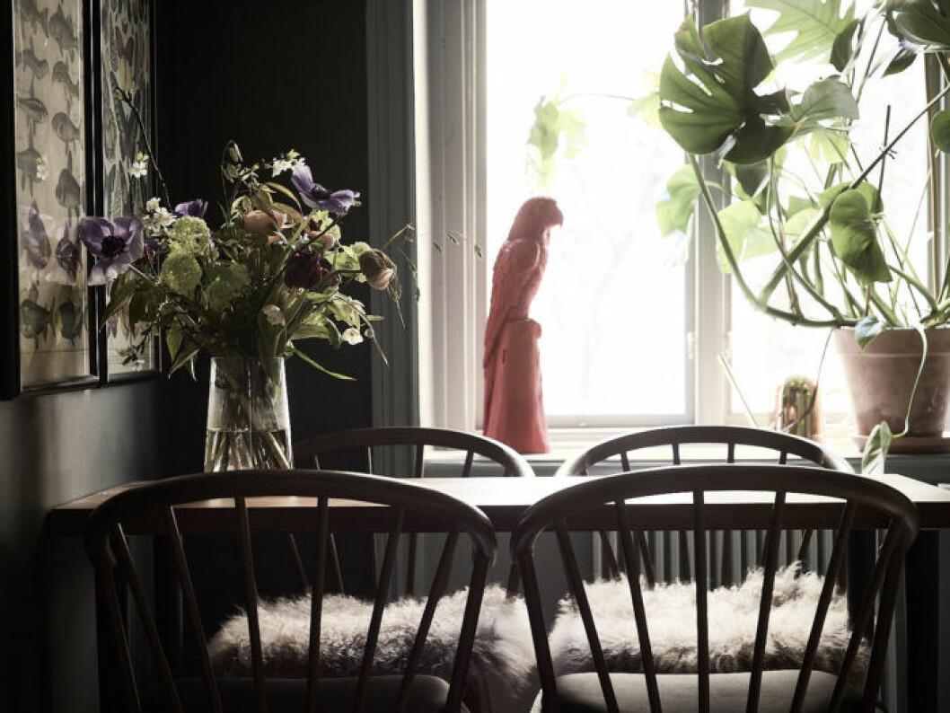 Närbild på blombukett på köksbordet, rosa fågeldekoration, vattenkanna i mässing och monstera i lerkruka.
