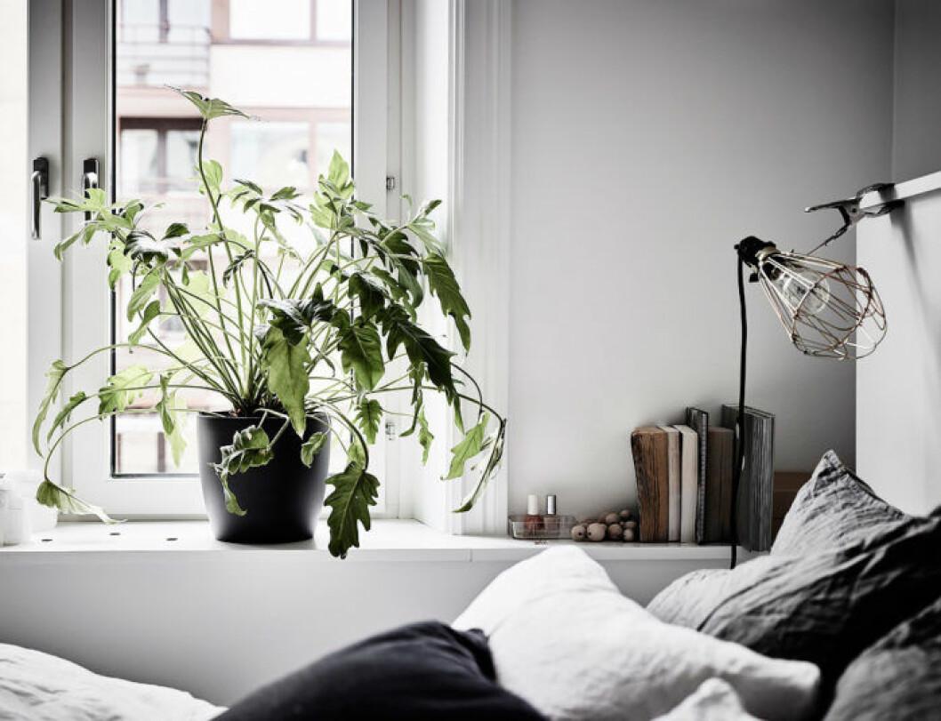 Sovrum med filodendron och klämspot, worklamp.