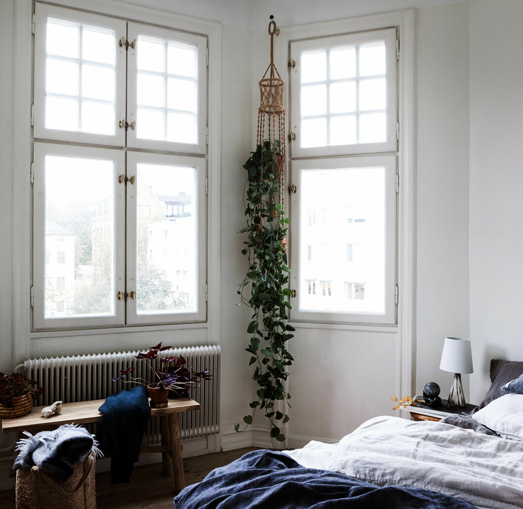 Bedroom with green plants and blue bedding.
