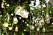 Ljuslyktor och ljusslingor i trädgård, bröllopsdekoration.