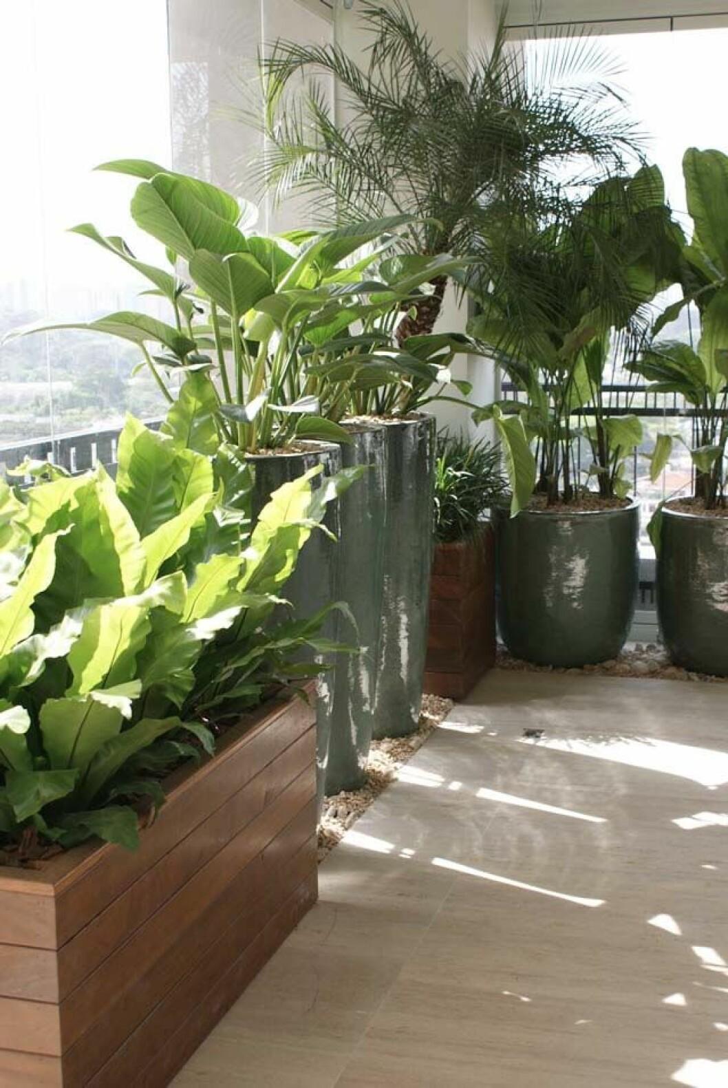Massor av växter.