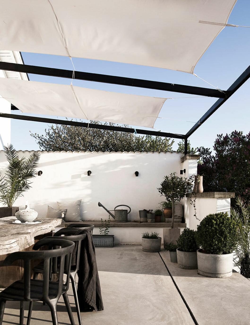 Terrassen är omringad av magiska växter