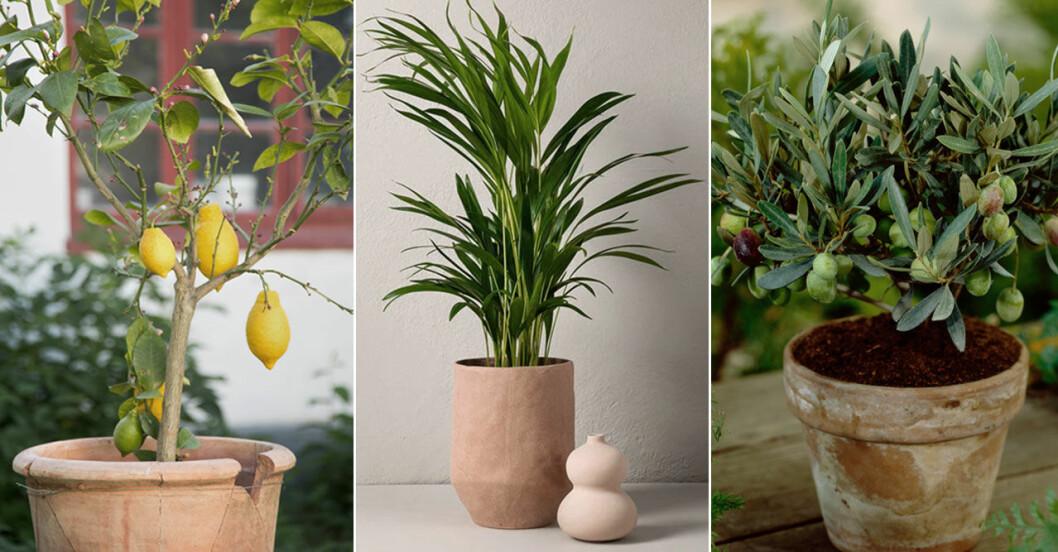 4 snygga växter som skapar en grön oas på balkongen