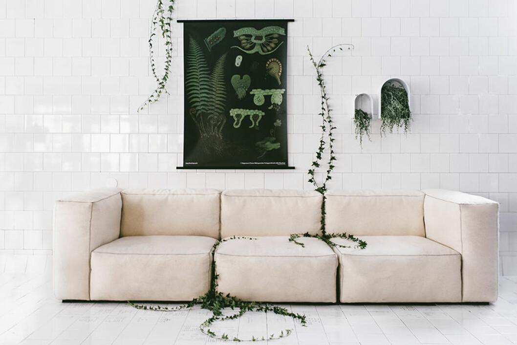 900_Canvasposter Ormbunke med soffa av Sofia Ristic
