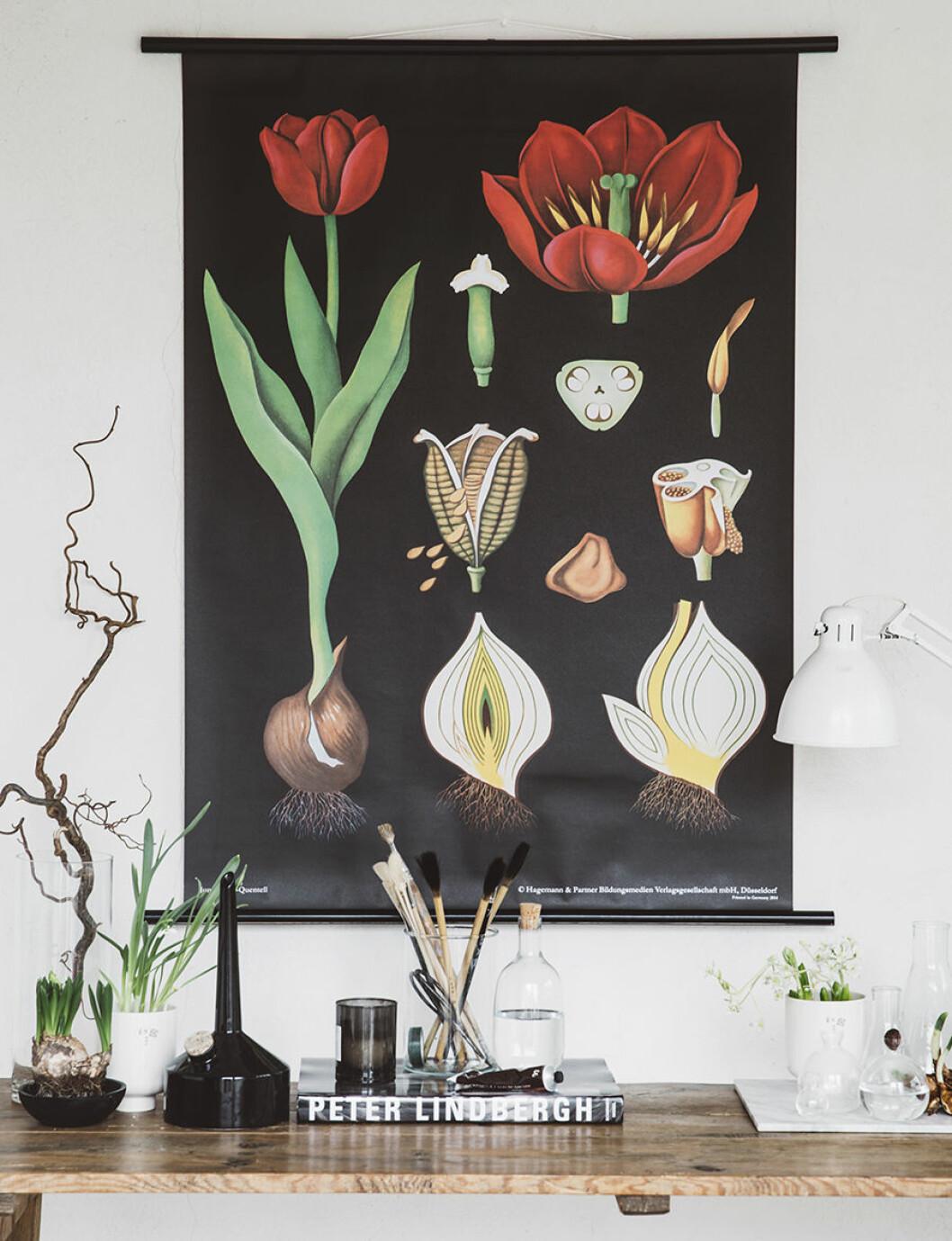 900_Canvasposter Tulpan av Pella Hedeby 4