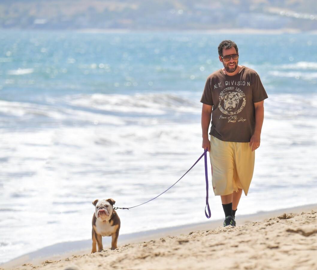 adam sandler med hund