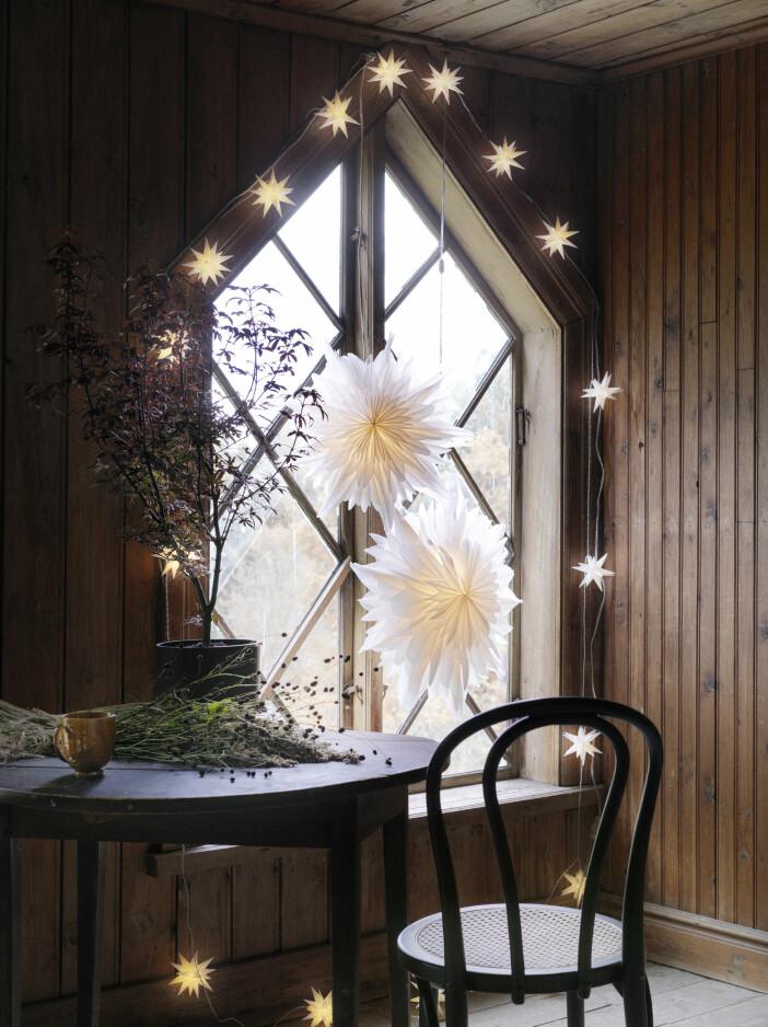 adventsstjärnor och ljusslingor från åhléns julen 2020