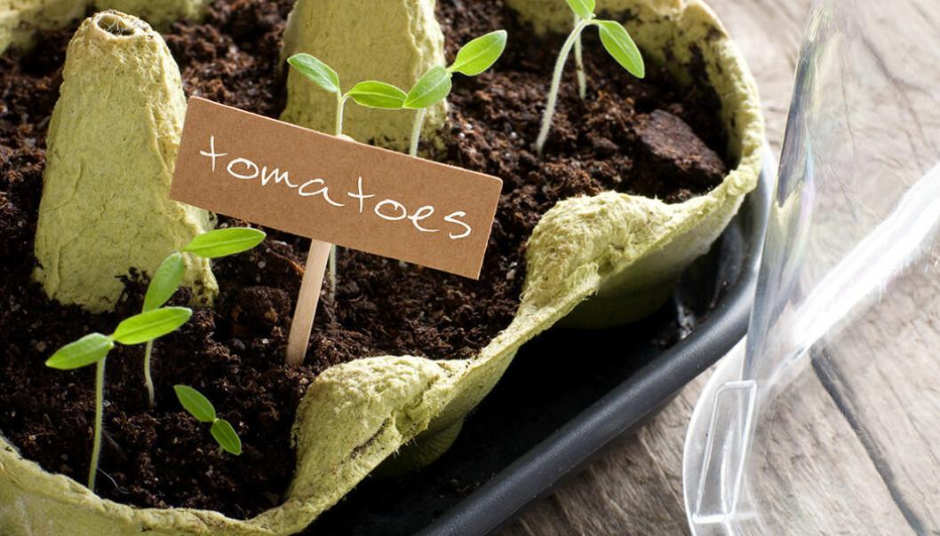 Odla örter och växter i äggkartongen!