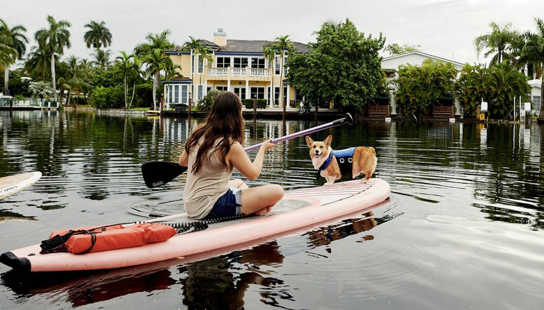 Etiska upplevelser med djur för turister – via Airbnb